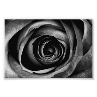Black Rose Flower Floral Decorative Vintage Photo Print