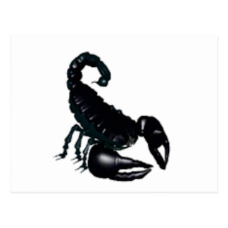 Black Scorpion Postcard
