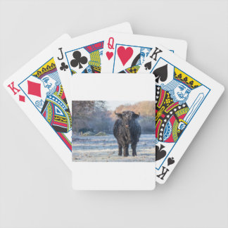 Black scottish highlander cow in winter landscape bicycle playing cards