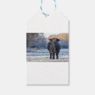 Black scottish highlander cow in winter landscape gift tags