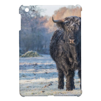 Black scottish highlander cow in winter landscape iPad mini cover