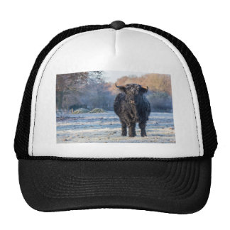 Black scottish highlander cow in winter landscape trucker hat