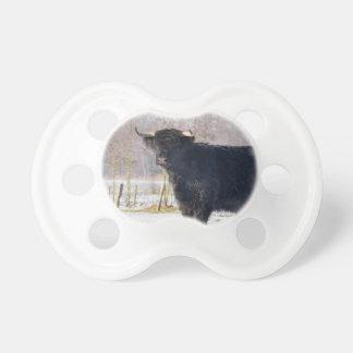 Black scottish highlander cow in winter snow pacifier