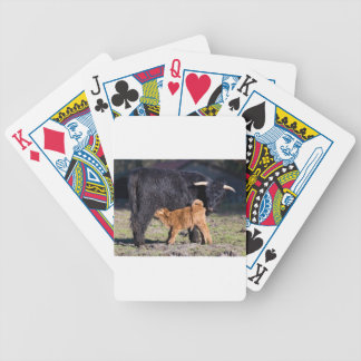Black Scottish highlander mother cow and young Bicycle Playing Cards