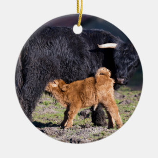 Black Scottish highlander mother cow and young Ceramic Ornament