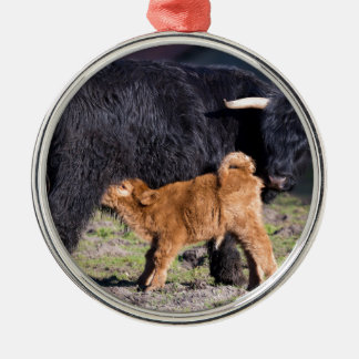 Black Scottish highlander mother cow and young Metal Ornament