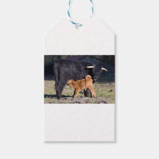 Black Scottish highlander mother cow and young Pack Of Gift Tags