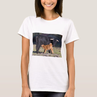 Black Scottish highlander mother cow and young T-Shirt