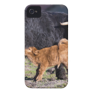Black Scottish highlander mother cow with drinking Case-Mate iPhone 4 Cases