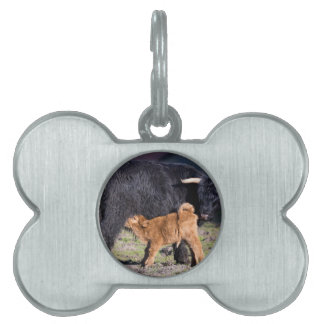 Black Scottish highlander mother cow with drinking Pet ID Tag