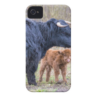 Black Scottish highlander mother cow with newborn Case-Mate iPhone 4 Cases