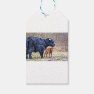 Black Scottish highlander mother cow with newborn Gift Tags