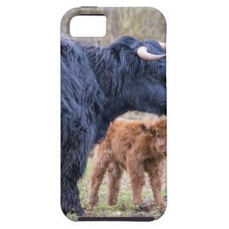 Black Scottish highlander mother cow with newborn iPhone 5 Cases