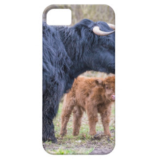 Black Scottish highlander mother cow with newborn iPhone 5 Covers