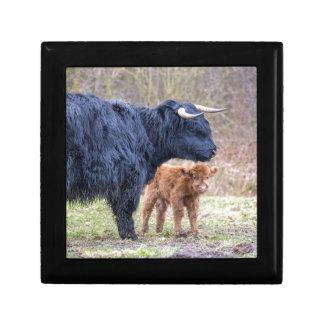 Black Scottish highlander mother cow with newborn Keepsake Box