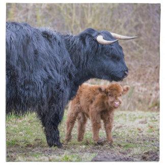 Black Scottish highlander mother cow with newborn Napkin