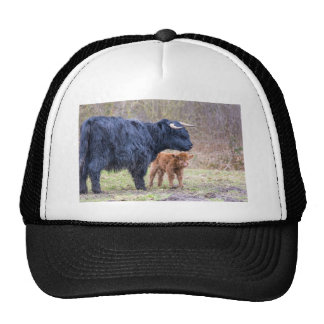 Black Scottish highlander mother cow with newborn Trucker Hat