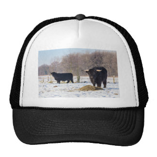 Black scottish highlanders in winter snow trucker hat
