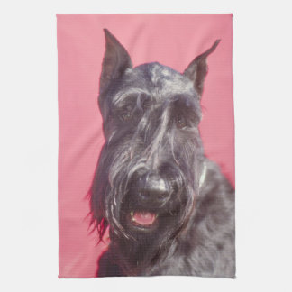 Black Scottish Terrier Kitchen Towel