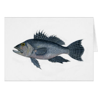 black sea bass 3  signed 2442.jpg card