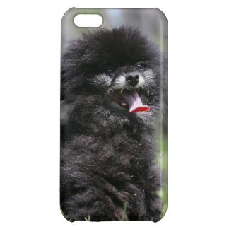 Black Senior Pomeranian iPhone 5C Cases