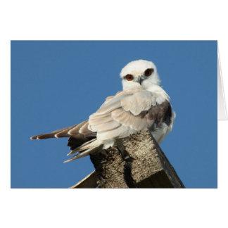 Black shouldered kite card