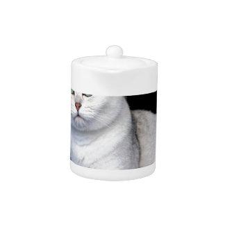 Black silver shaded British short hair cat