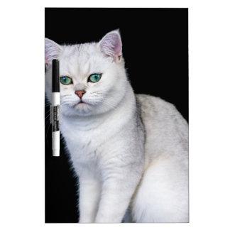 Black silver shaded British short hair cat Dry Erase Whiteboards