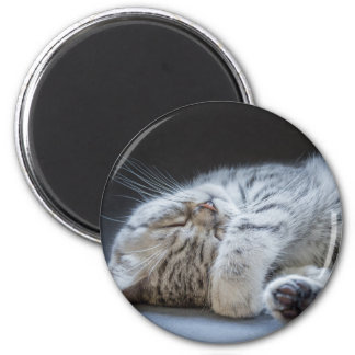 Black silver tabby kitten lying lazy 2 inch round magnet