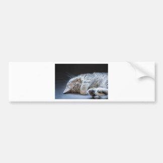 Black silver tabby kitten lying lazy bumper sticker