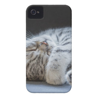 Black silver tabby kitten lying lazy iPhone 4 covers