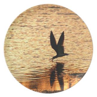 Black Skimmer Bird Plate