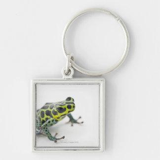 Black Spotted Green Poison Dart Frog (Ranitomeya Keychain