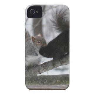 Black Squirrel iPhone 4 Covers