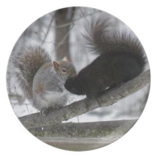 Black Squirrel Plates