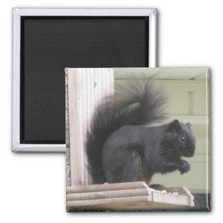 Black Squirrel Square Magnet