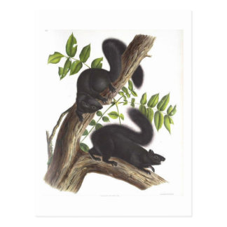 Black Squirrels Postcard
