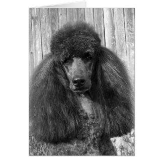 Black Standard Poodle Headstudy Card