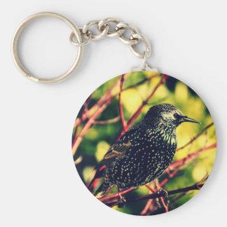 Black Starling Basic Round Button Keychain