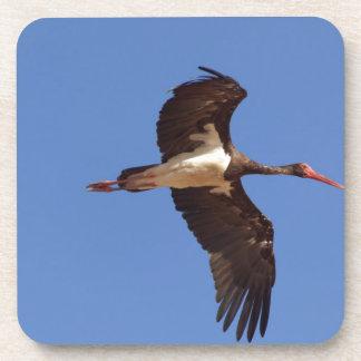 Black stork (Ciconia nigra) in flight Coaster