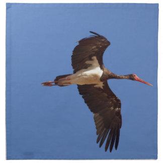 Black stork (Ciconia nigra) in flight Napkin