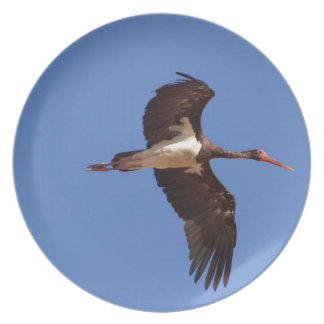 Black stork (Ciconia nigra) in flight Plate