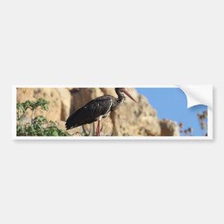 Black stork (Ciconia nigra) on a rock. Bumper Sticker