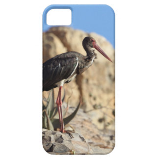 Black stork (Ciconia nigra) on a rock. Case For The iPhone 5