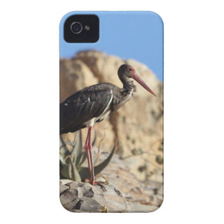 Black stork (Ciconia nigra) on a rock. Case-Mate iPhone 4 Cases