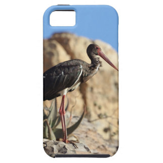 Black stork (Ciconia nigra) on a rock. iPhone 5 Covers