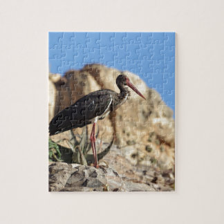 Black stork (Ciconia nigra) on a rock. Jigsaw Puzzle
