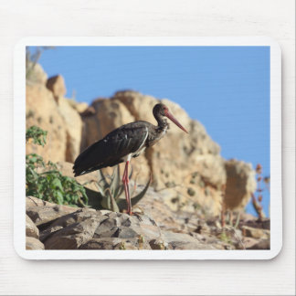 Black stork (Ciconia nigra) on a rock. Mouse Pad