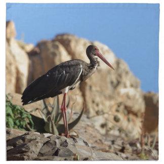 Black stork (Ciconia nigra) on a rock. Napkin