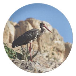 Black stork (Ciconia nigra) on a rock. Plate
